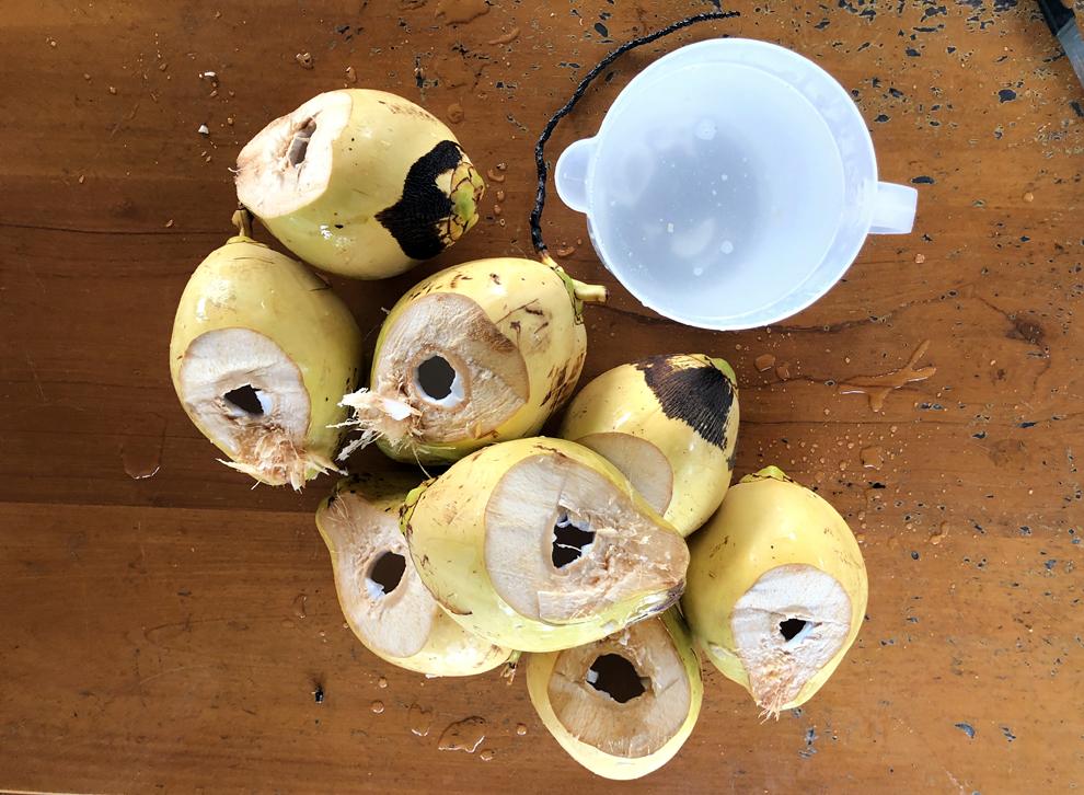 Finca - 8 noix de coco pour plus de 2 litres de jus !