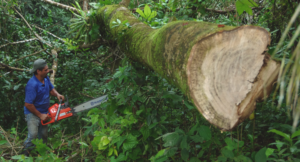 Costa Rica - L'arbre est tomb� chez le voisin