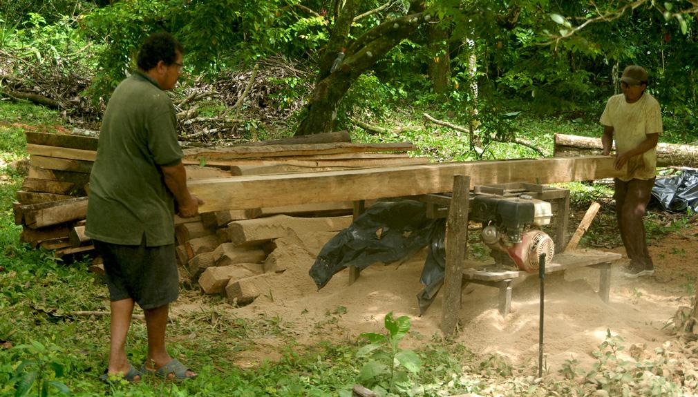 Coupe de bois au Costa Rica
