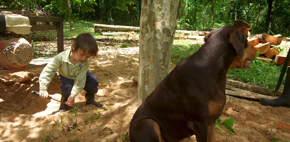 Costa Rica - Enfants et chiens jouent dans la sciure de bois