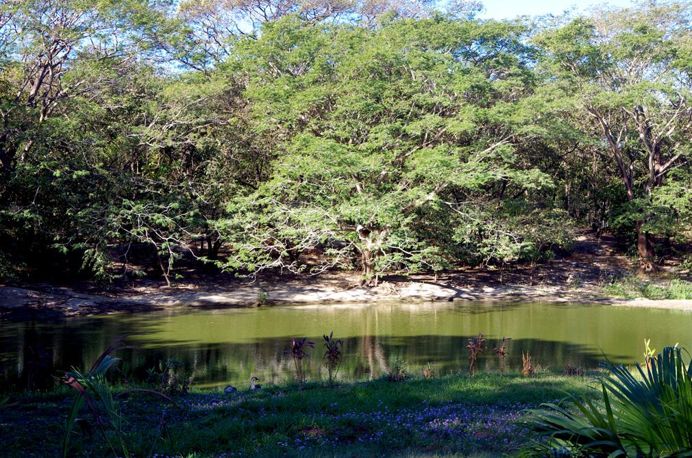 Costa Rica - Mare aux crocodiles à Liberia / Guanacaste