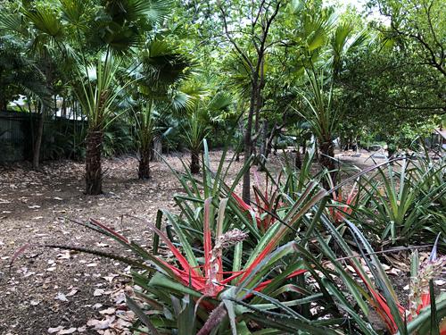 Costa Rica, Guanacaste, Tamarindo après la saison sèche - Vue 3