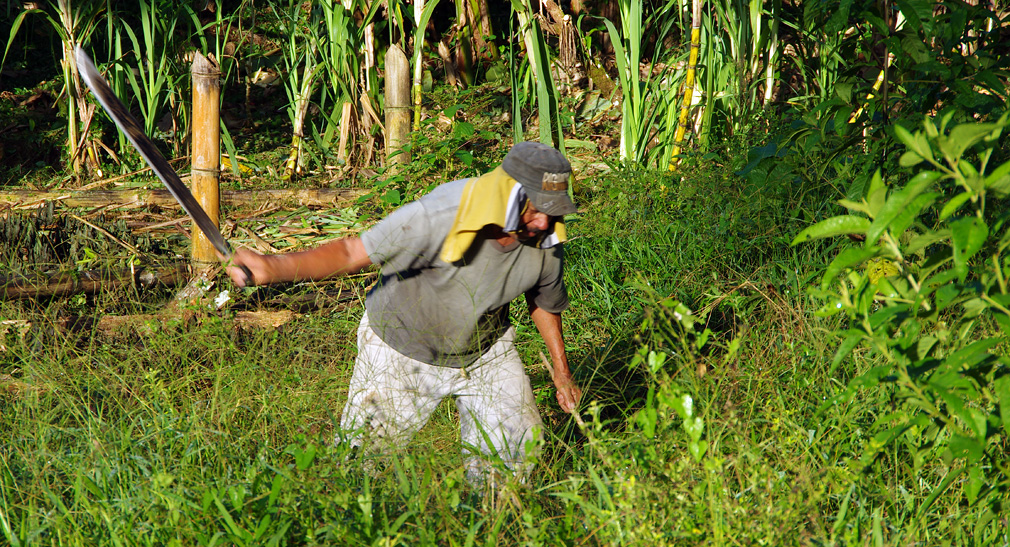 Costa Rica, un péon au travail