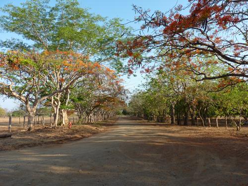 Chemin d'entrée de Establo - Hacienda Pinilla - Guanacaste - Costa Rica