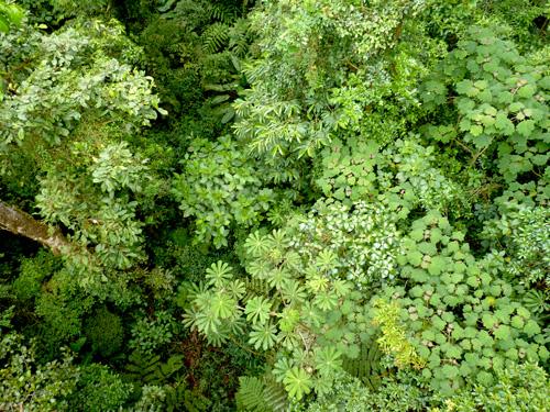 Canopée dans la Forêt de Nuages, Monteverde, Costa Rica