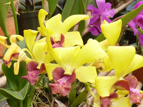 Le jardin des Orchidées, centre de Monteverde, Costa Rica