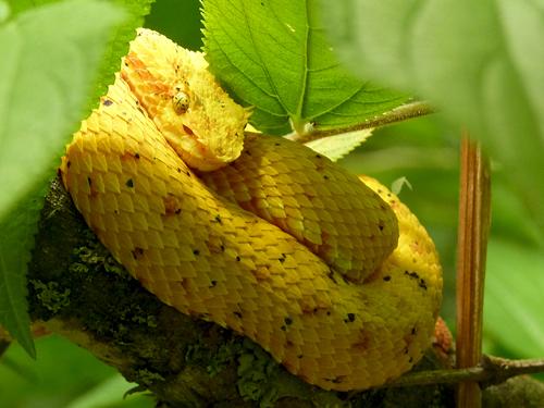Le serpentarium, centre de Monteverde, Costa Rica