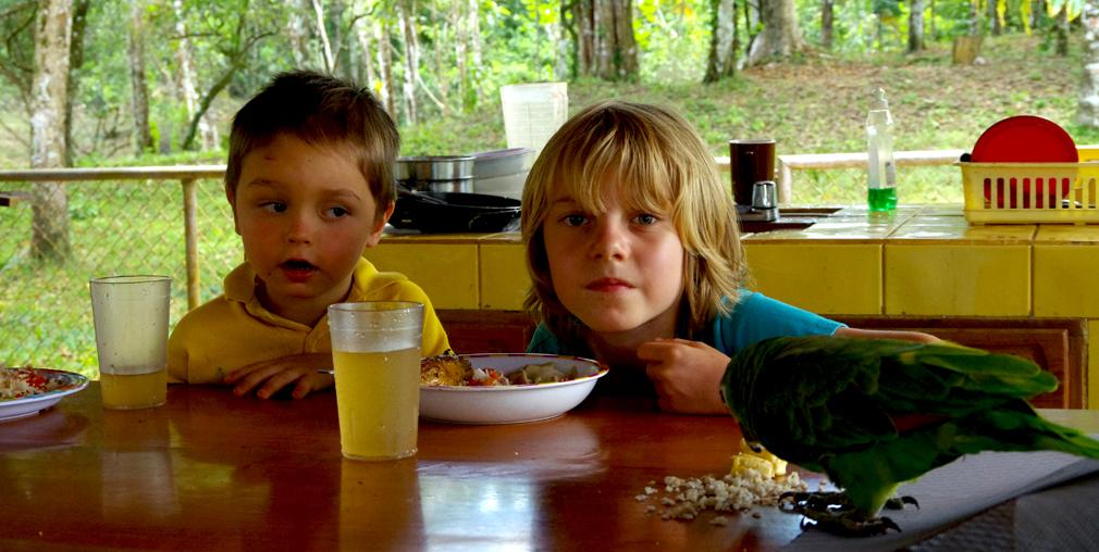 Costa Rica, perroquet vert, Toucan-Lodge, Bijagua le 13 mars 2014 - Vue 02