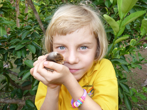Anna et un poussin - Costa Rica - Décembre 2012 - 1