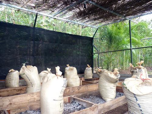 Préparation d'un potager au Costa Rica - 2